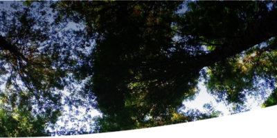 header_ambiente